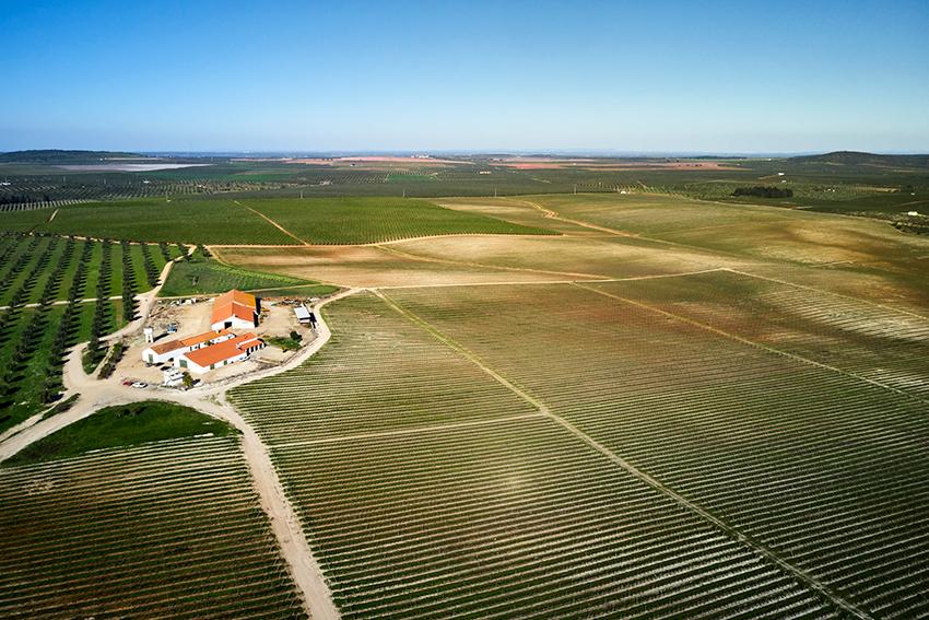Hier wächst der Wein der Familie Margaça