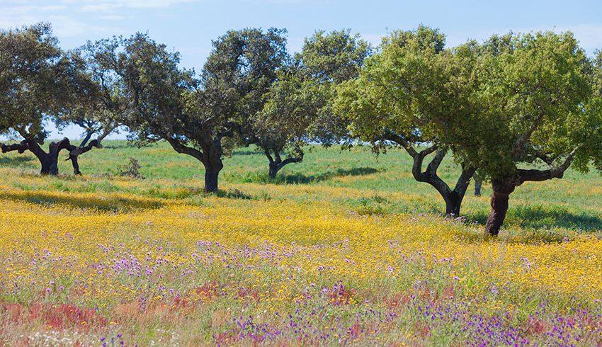 Ätherische Öle aus Portugal