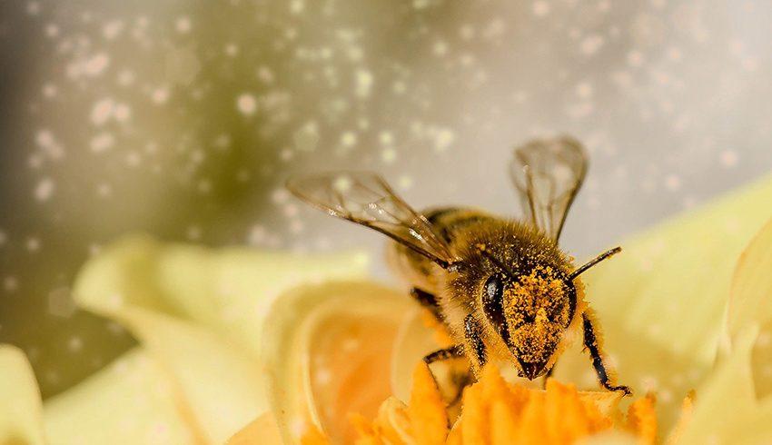 BEESWEET – viel mehr als Honig!